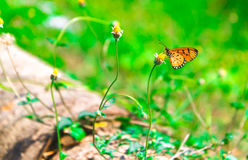 Cerrado encima de mariposa en la flor Fotos de archivo