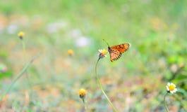 Cerrado encima de mariposa en la flor Fotografía de archivo libre de regalías