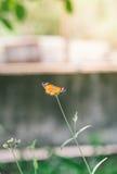 Cerrado encima de mariposa en la flor Imagen de archivo