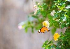Cerrado encima de mariposa en la flor Foto de archivo