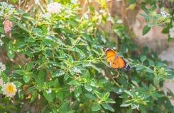 Cerrado encima de mariposa en la flor Fotografía de archivo