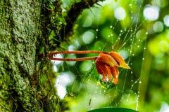 Cerrado encima de orquídea salvaje Fotografía de archivo