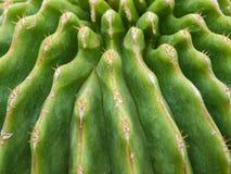 Cerrado encima de textura del cactus Foto de archivo
