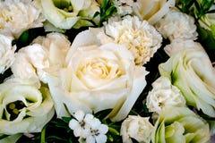 Cerrado para arriba de la flor blanca Imagen de archivo