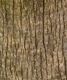 Cerrado para arriba de la textura vertical de la madera del tablón Foto de archivo libre de regalías