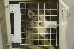 Cerrado temporal de los perros en la jaula para transportar foto de archivo libre de regalías