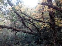 Cerro Lindo - EL Bolson Foto de archivo libre de regalías