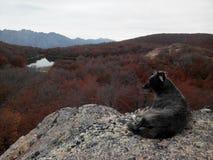 Cerro Lindo - El Bolson obrazy royalty free