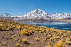 Cerro Miscanti, увиденное от банков Lagunas Miscanti расположенных в altiplano области Антофагасты, в северной Чили Стоковые Изображения RF