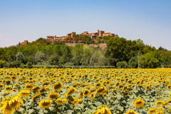 Certaldo castle with sunflowers Royalty Free Stock Images