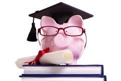 Certificato del diploma di grado del porcellino salvadanaio del laureato dello studente isolato su bianco fotografie stock