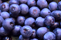 Certified organic blueberries, freshly picked stock photos