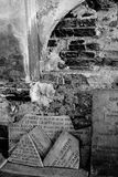 Certosa di Bologna Foto de archivo libre de regalías