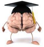 Cerveau Photo libre de droits