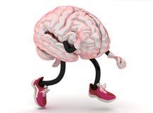 Cerveau Photo stock
