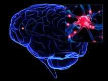 Cerveau illustration de vecteur