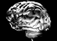 Cerveau Image libre de droits