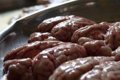 Cerveau animal à vendre sur le marché local images libres de droits