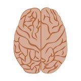 Cerveau d'icône de médecine Photo stock
