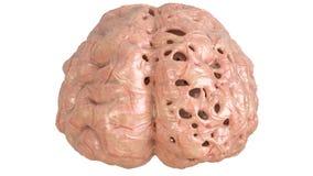 Cerveau dans l'encéphalopathie grave, démence, Alzheimer, Chorea Huntington - rendu 3D illustration libre de droits