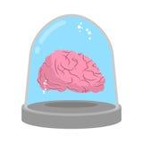 Cerveau dans la cloche en verre Recherche de laboratoire Étude d'esprit illustration stock