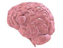 Cerveau de Humain Photographie stock