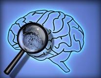 Cerveau - Person ; ity - identité Photo stock