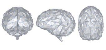 Cerveau polygonal gris