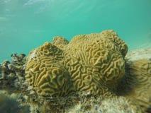 Cerveau sous-marin Images stock