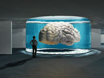 Cerveau superbe Photo stock