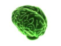 Cerveau vert Image libre de droits