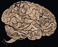 Cerveaux de dentelle Photo stock