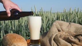 A cerveja derrama em um vidro em um campo de trigo filme