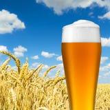 Cerveja do trigo com gotas de orvalho Fotos de Stock