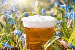 A cerveja e as flores azuis saltam, snowdrop Scilla Foto de Stock Royalty Free