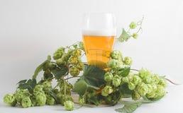 Cerveja e lúpulo Fotografia de Stock