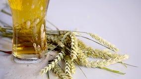 A cerveja está derramando no vidro no fundo branco com grupo de A do trigo Fim acima filme