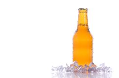 Cerveja isolada fresca Foto de Stock Royalty Free