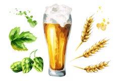 Cerveja, lúpulos, grupo do malte watercolor ilustração do vetor