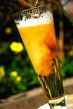 Cerveja que está sendo derramada Fotografia de Stock Royalty Free