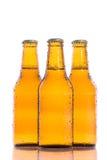 Cervejas isoladas frescas Foto de Stock