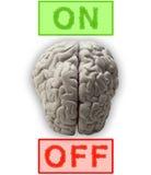 Cervelli Fotografia Stock Libera da Diritti