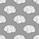 Cervelli senza cuciture sui precedenti grigi Fotografia Stock