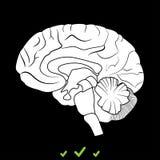 Cervello è icona bianca illustrazione vettoriale