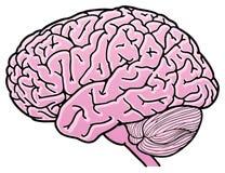 Cervello Immagine Stock Libera da Diritti