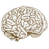 Cervello antico dell'illustrazione dell'incisione Immagini Stock