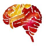 Cervello arancio con effetto della galassia fotografie stock