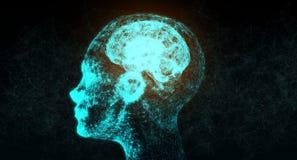 Cervello astratto di Mesh Of Human Head With della connessione di rete Fotografia Stock Libera da Diritti