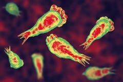 Cervello-cibo dell'infezione dell'ameba, trophozites del fowleri di Naegleria del parassita illustrazione di stock