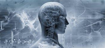 Cervello, concetto di pensiero Immagine Stock Libera da Diritti